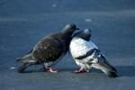 Love Birds, Again